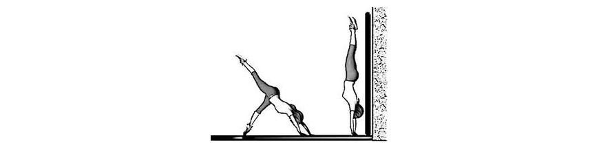 Aire d'évolution - Chemin Gym